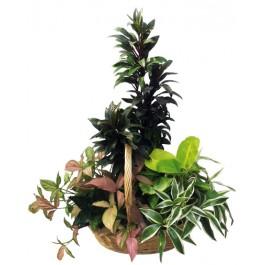 Arreglo de plantas, TH#4101 Arreglo de plantas