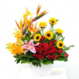 Bright Mixed Arrangement, Bright Mixed Arrangement