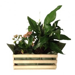 Mixed Plants In Box, Mixed Plants In Box