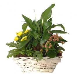 Mixed Plants In Basket, Mixed Plants In Basket
