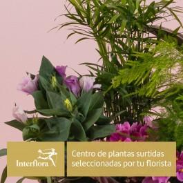 Centro de Plantas del Florista, Cesta de plantas surtidas seleccionadas por tu florista Interflora