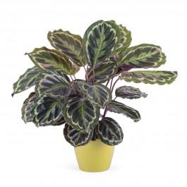 Planta individual con base, UY#PB Planta individual con base