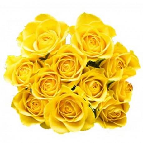 12 yellow roses, 12 yellow roses