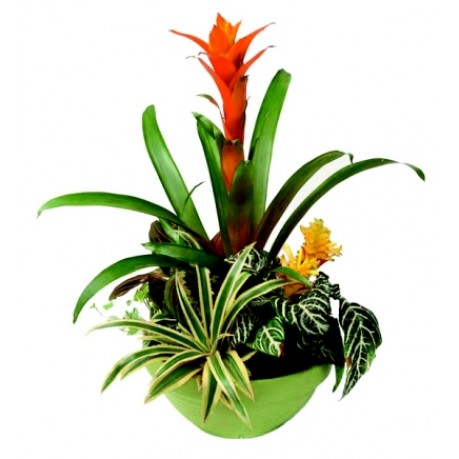 Arreglo de plantas, GB#AP.Arreglo de plantas