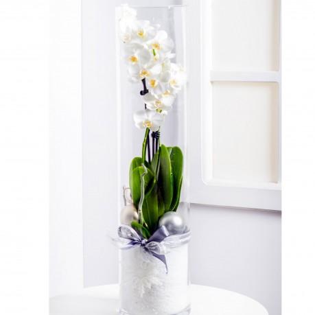 Modern Karácsonyi virágtál Phalaeinopsissal, Modern Karácsonyi virágtál Phalaeinopsissal