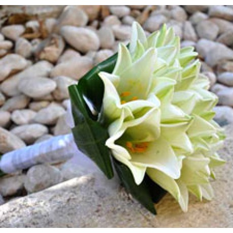 white lilies, white lilies