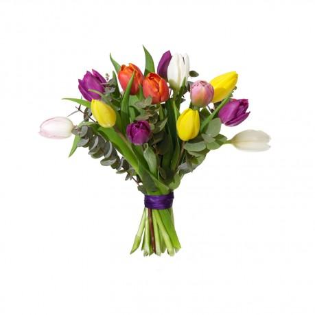 Mixed tulips, small, Mixed tulips, small