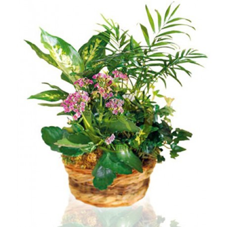 Arrangement of Plants, TR#4234 Arrangement of Plants