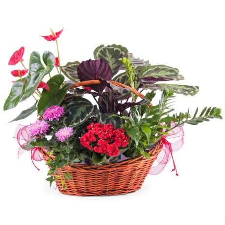 Decoraci n con flores navidad 2017 2018 interflora - Plantas para el exterior ...
