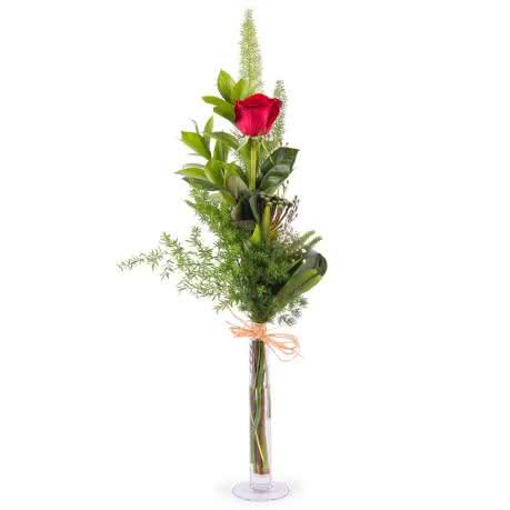 Prima, 1 Rosa Roja de Tallo Largo