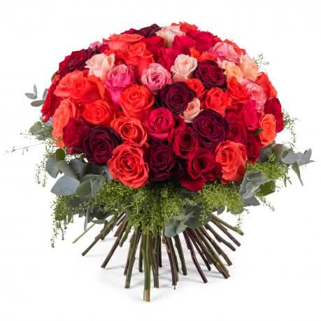 Derroche, 60 Rosas Multicolor de Tallo Corto