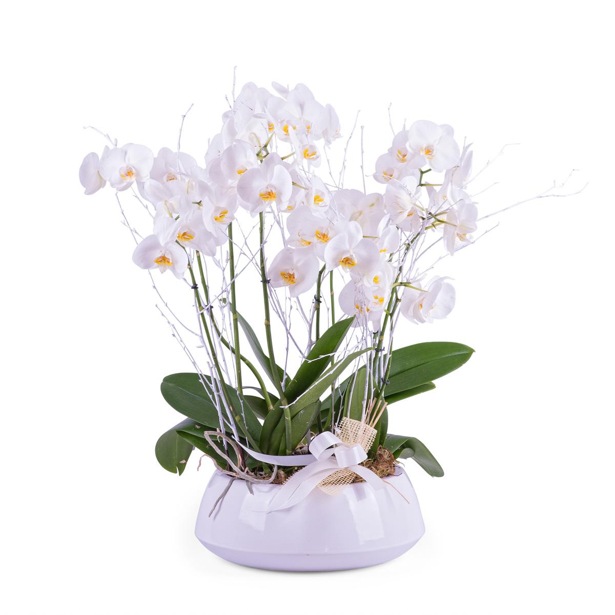 Centro de plantas de Phalaenopsis blancas - Env?o de Flores a Domicilio