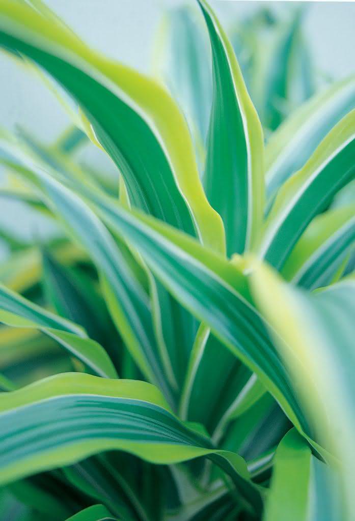 Blog Interflora - Diez Plantas para Regalar a un Hombre