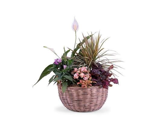 Plantas para decorar tu casa con estilo 'hygge'