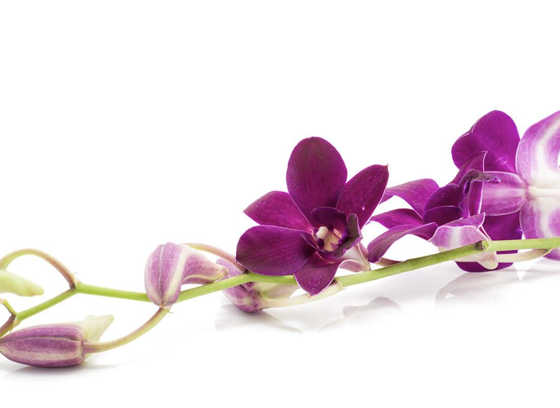 Flores moradas para mujeres luchadoras el Día de la Mujer