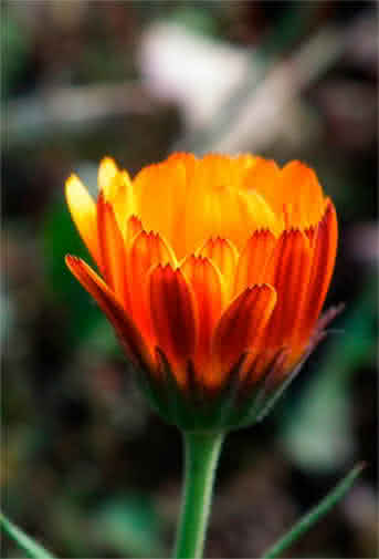 Blog Interflora - Plantas para el verano. Cuidados y trucos para mantenerlas