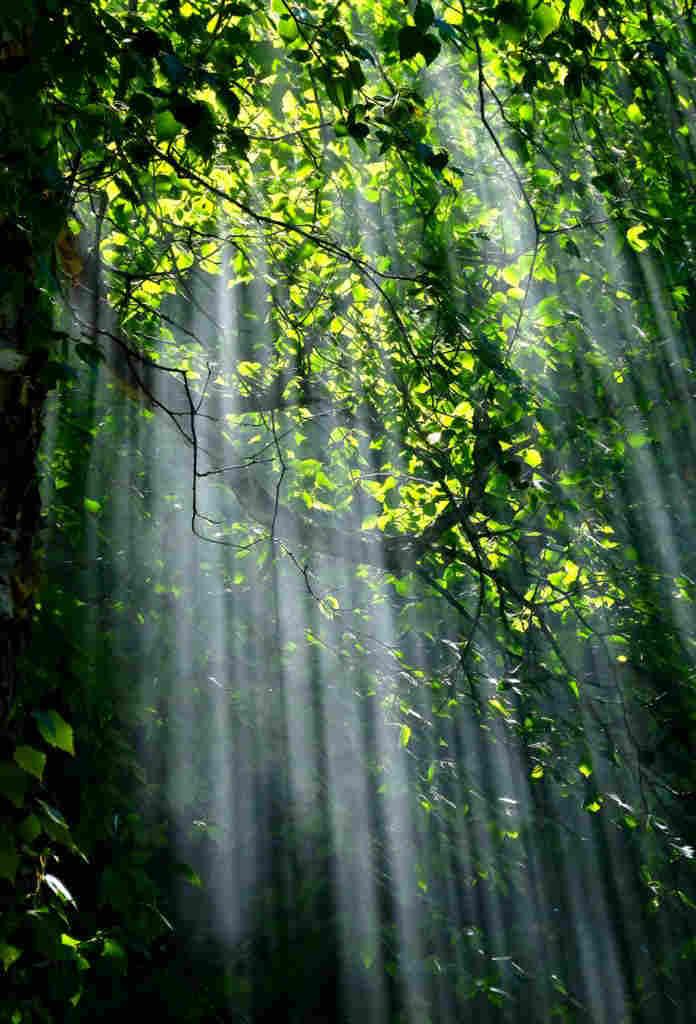 Blog Interflora - Día mundial del Medio Ambiente