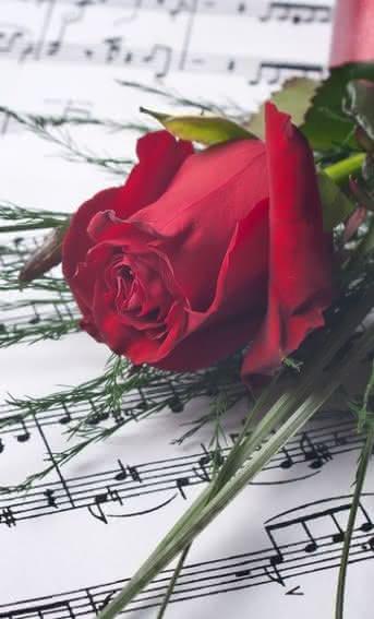 Regala flores y música en San Valentín