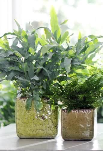 10 plantas para regalar a un hombre