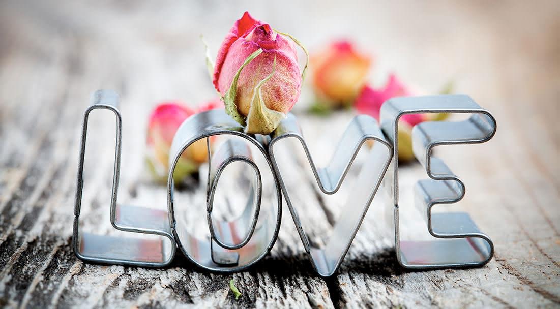 Plantas eternas con mensajes de amor para siempre