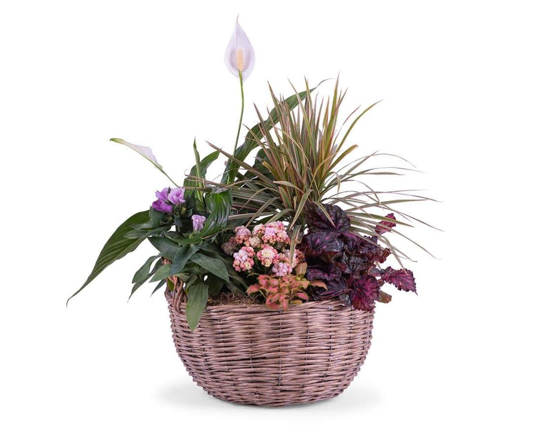Plantas, flores y cestas de plantas para papá