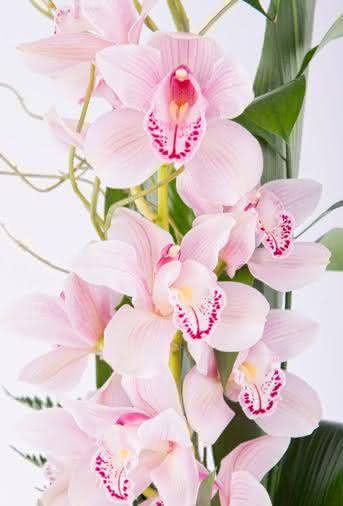 Guías Interflora - Guía para cuidar tus orquídeas en casa