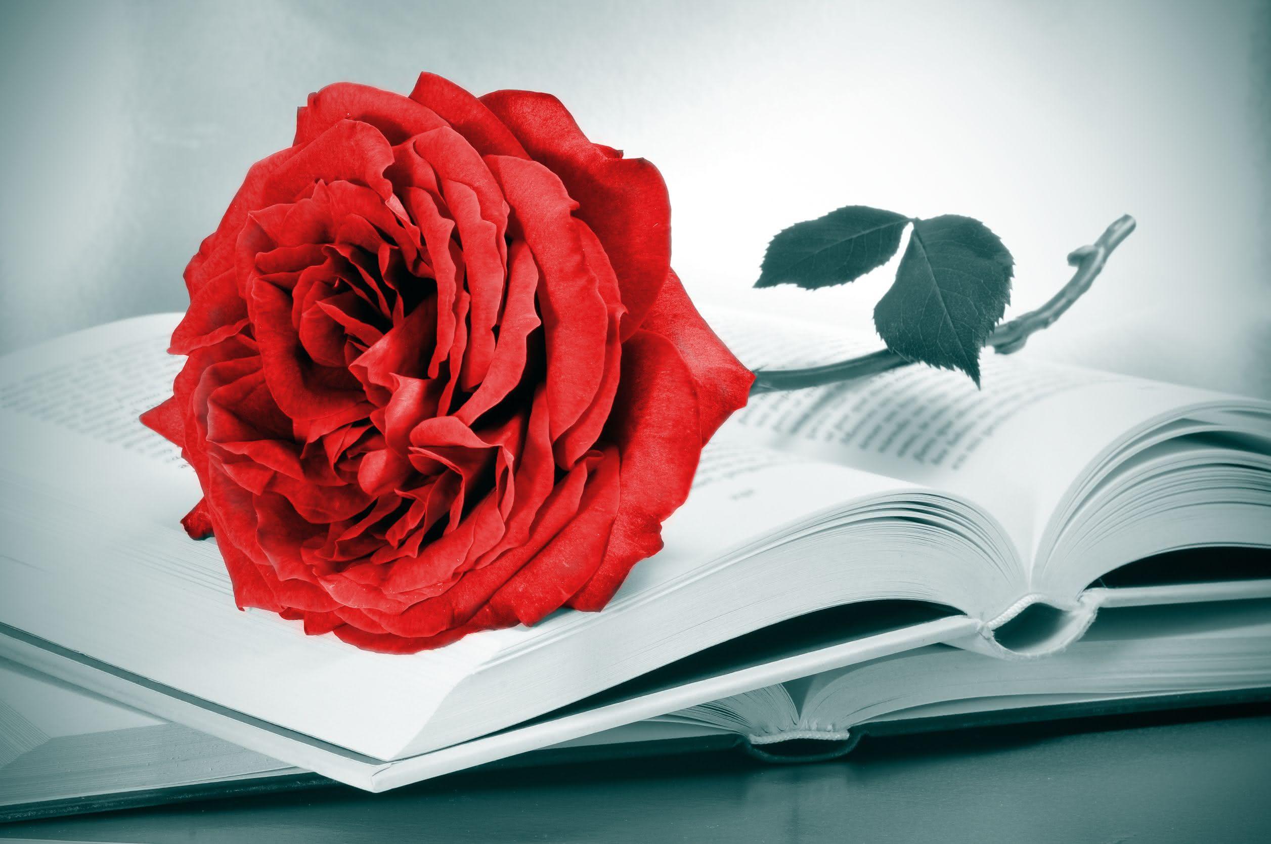 Libros y rosas por Sant Jordi también para los niños
