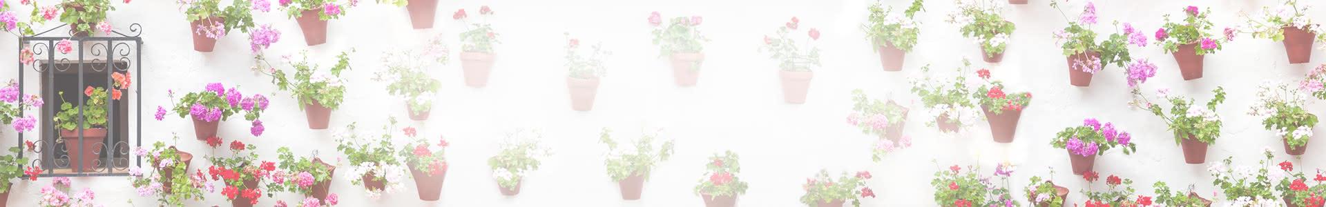 Flores Fiestas Mayo