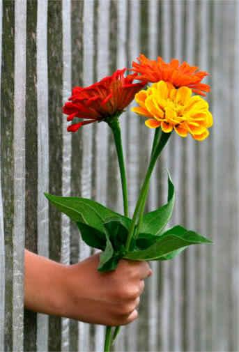 Blog Interflora - Reglas de protocolo. Regalar flores