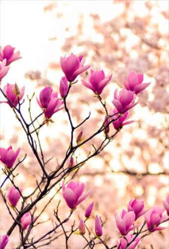 Blog Interflora - Fiestas florales alrededor del mundo