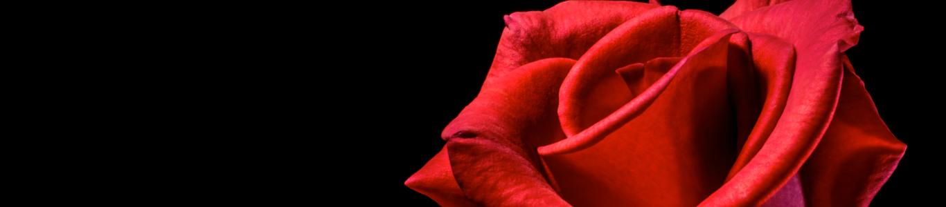 Ramos de rosas para San Valentín 2017