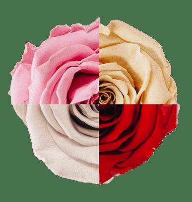 Regalar un Ramo de Rosas personalizado