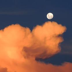 Interflora - Día de la Luna al Fuego