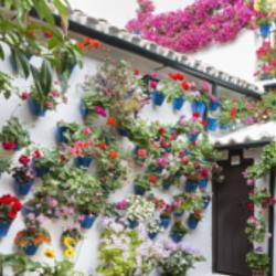 Interflora - Concurso de patios de Córdoba
