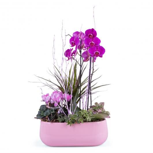 Centro de plantas en tonos rosas