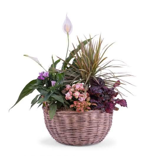 Composición de plantas en una cesta de mimbre que le da cierto aire rural