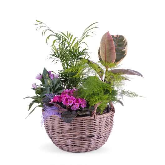 Composición de plantas en la que la Chamaedorea es la protagonista