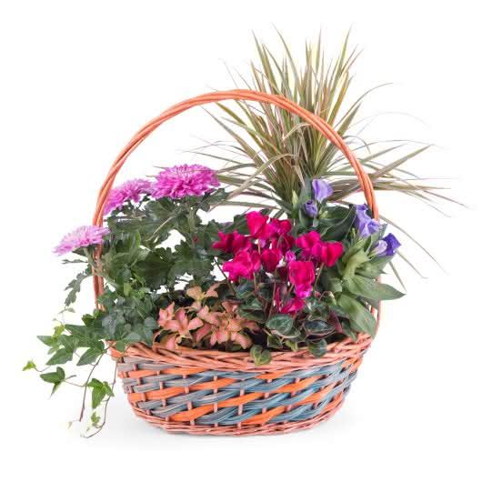 Centro de plantas variadas y coloridas