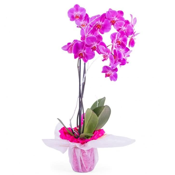 Detalle Orquídea Día de la Madre