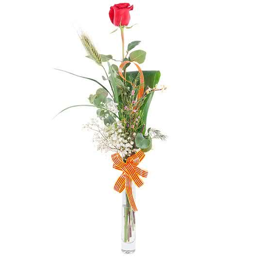 Rosa Sant Jordi, rosa de tallo largo con decoración tradicional de espiga y señera gratuita incluida para felicitar el día de Sant Jordi