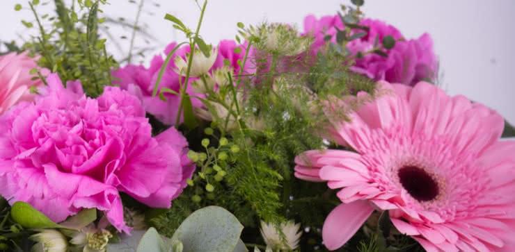 Enviar gerberas y claveles rosas