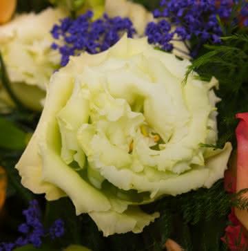 Enviar rosas y gerberas