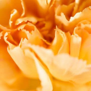 Enviar corona de flores de condolencias