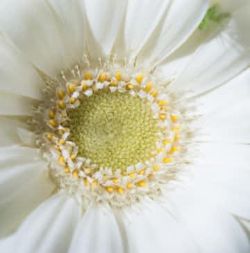 Enviar flores de condolencias
