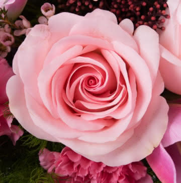 Enviar liliums rosas