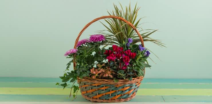 Enviar una cesta de plantas a domiclio