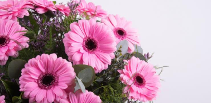 Enviar ramo de gerberas tonos rosas y moradas