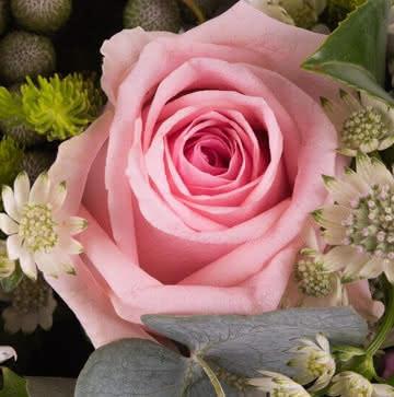 Ramo con rosas rosas