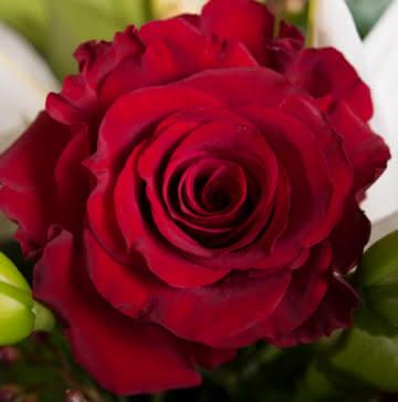 Enviar ramos de rosas rosas