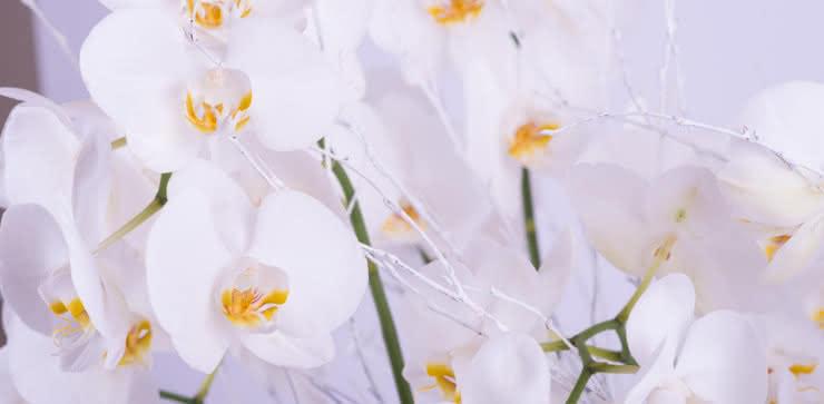 Enviar una planta de orquídeas a domiclio